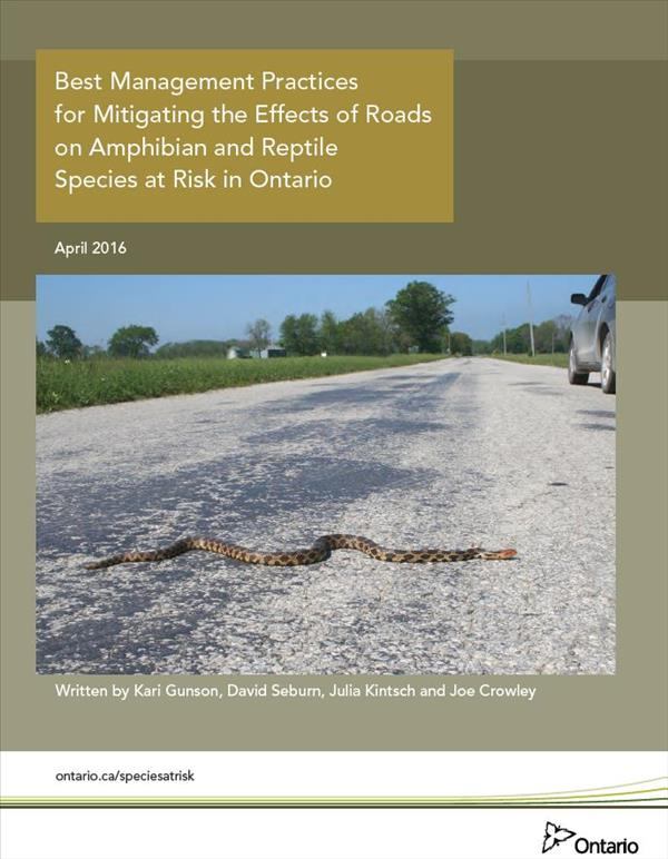 Best Management Practices for Mitigating the Effects of Roads on Amphibian and Reptile Species at Risk in Ontario