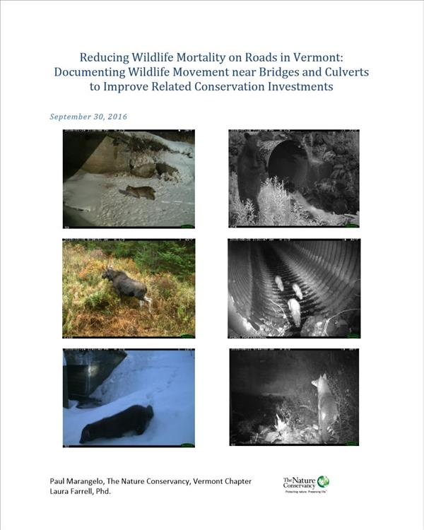 Reducing Wildlife Mortality on Roads in Vermont:  Documenting Wildlife Movement near Bridges and Culverts to Improve Related Conservation Investments